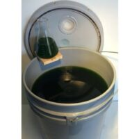 Algae-Culture-Spirulina-5-Gallons-500