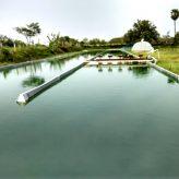Live Spirulina culture from Tamilnadu , spirulina from india