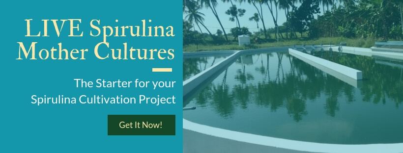 LIVE spirulina culture- Mother seed for growing your own spirulina
