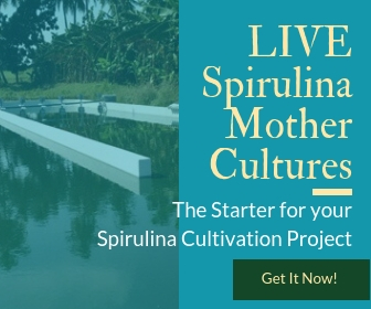 LIVE spirulina Mother cultures for growing your own spirulina